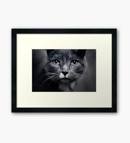 Les Yeux du Chat Framed Print