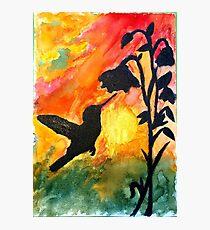 Morning Nectar Photographic Print