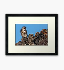 Ode to My Pine Cone Framed Print