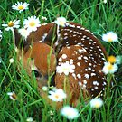 Fawn & Wildflowers by WorldDesign