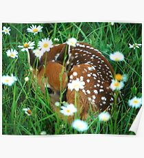 Fawn & Wildflowers Poster
