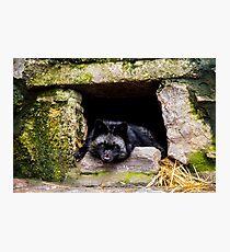 Wild animal Photographic Print