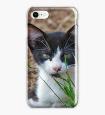 tuxedo kitten  iPhone Case/Skin