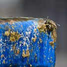 Thirsty Wasp by Diego Re