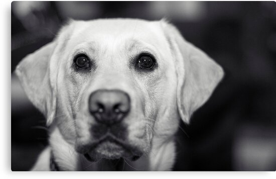 Puppy Dog Eyes II by iltby
