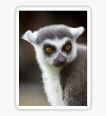 Lemur close up Sticker