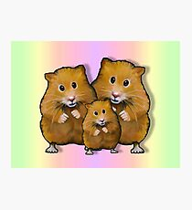 Hamster Family of Three, Colorful Background: Art Photographic Print