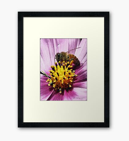 Pollen Here, Pollen There, Pollen Everywhere Framed Print