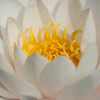 Perfect Petals by imagejournal