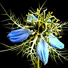 Wildflower by George Kypreos