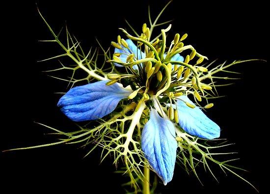 Wildblume von George Kypreos