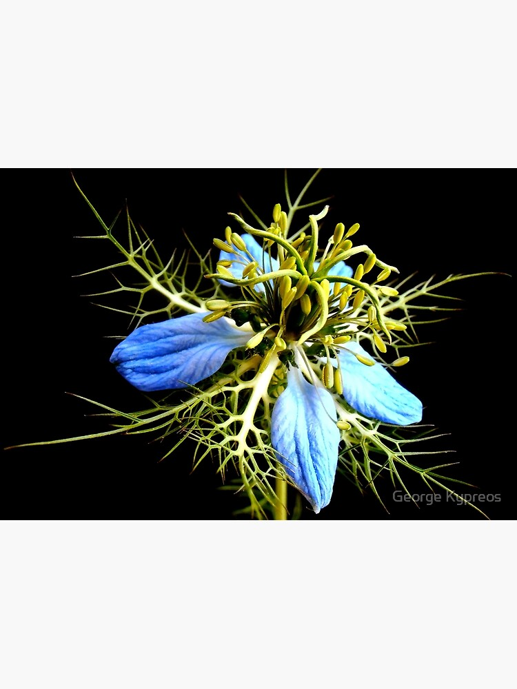 Wildblume von GeorgeKypreos