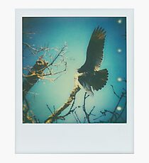 cathartes aura Photographic Print