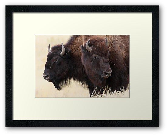 Bison Friendship by WorldDesign