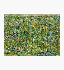Vincent Van Gogh - Patch of grass Photographic Print