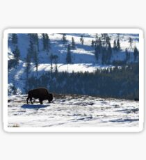 Bison of Lamar Valley Sticker