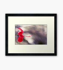 Hibiscus Bokeh Framed Print