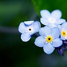 Luscious Blue by Josie Eldred