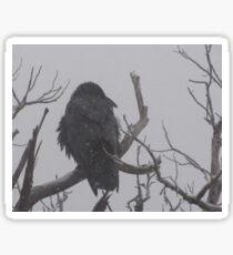 Snowstorm Raven Sticker