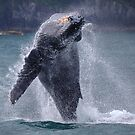 Whales can fly! by James Anderson