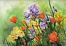 Irises and Poppies  by Sherry Cummings