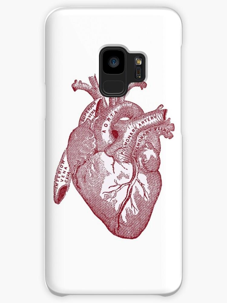 anatomical heart\