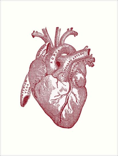 Láminas artísticas «corazón anatómico» de thedeathcats | Redbubble