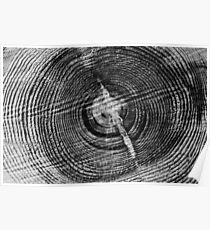 Black and White Wood Round Photography Print Poster
