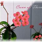 Crown of Thorns by June Holbrook
