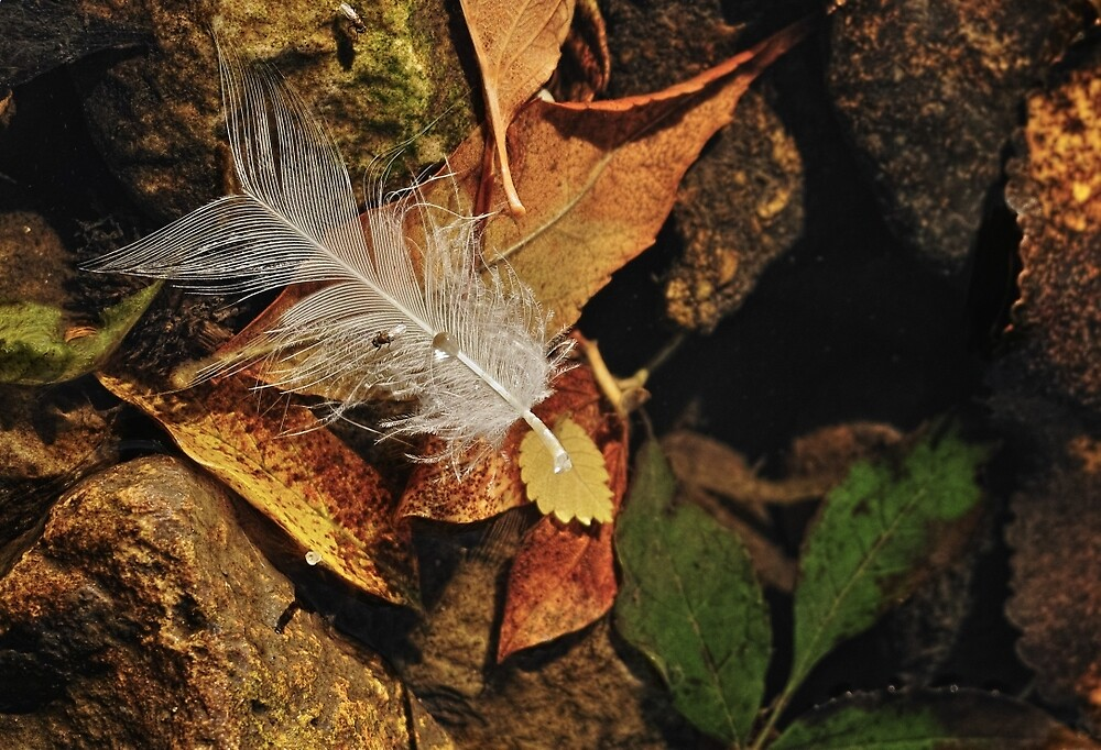 Feather by Michael Wolf
