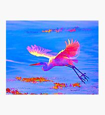 Of A Different Feather Photographic Print
