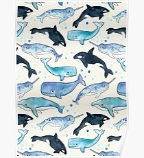 Whales, Orcas & Narwhals Poster