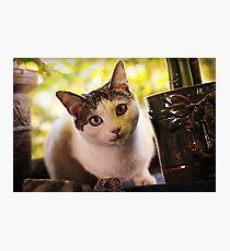 Meet Olaf Photographic Print