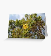 Flowers in the Simien Mountains, Ethiopia Greeting Card