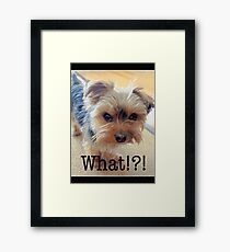 Dog | Dogs | Yorkie | What!?! (with text) | Humor | Humour Framed Print