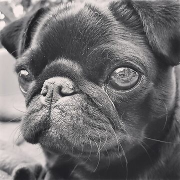 PUG FACE by kirsten-designs