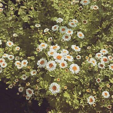 Daisy by kirsten-designs
