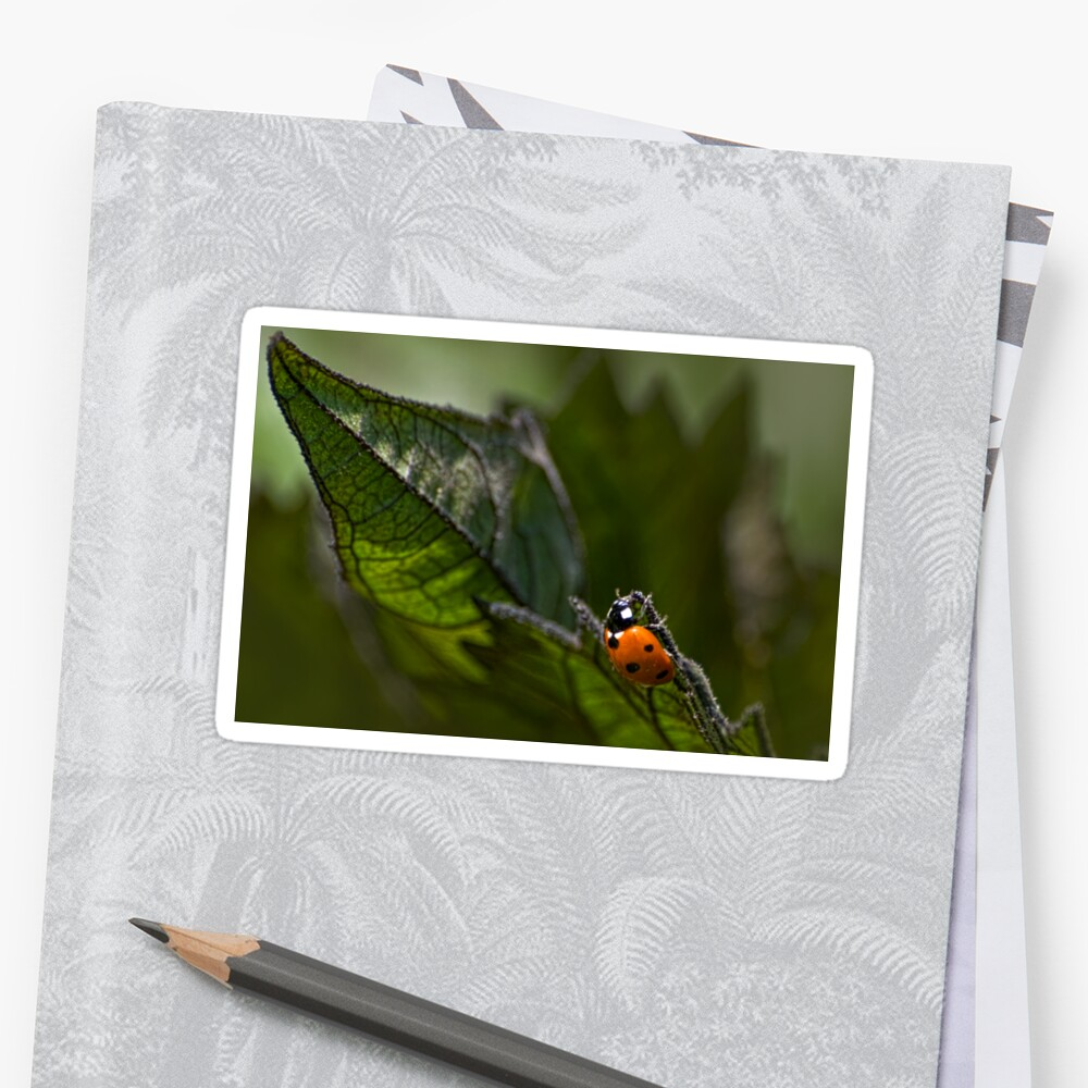 Marienkäfer auf Sonnenblumenblatt Sticker