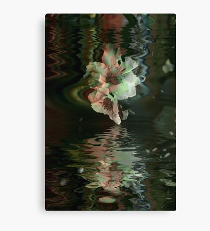 Camellia Immersed Canvas Print