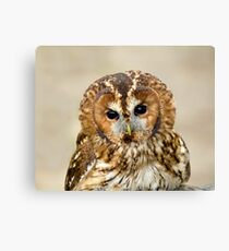 Tawny Owl head shot Canvas Print