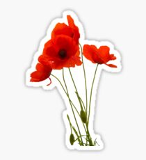 Delicate Red Poppies Vector Sticker
