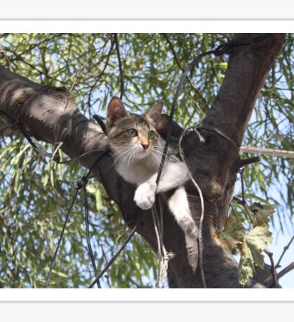 Bi-Color Tabby Cat In Tree Sticker