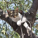 Bi-Color Tabby Cat In Tree 3 by taiche