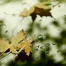 Leaves and Drops by Valerie Rosen