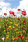 Wildflower Meadow by John Keates
