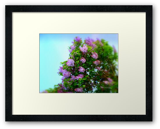 Lilac in the Sky by Charmiene Maxwell-Batten