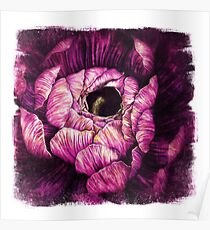 Ranunculus Illustration Flower Close Up Coloured Pencil Pen Grunge Texture Purple Lilac Magenta Pink Poster
