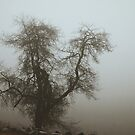 Fog and Branch by lightwitch