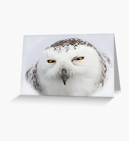 """""""Whooo goes there?"""" - Snowy Owl Greeting Card"""