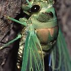 Cicada of Emerald & Gold by WorldDesign